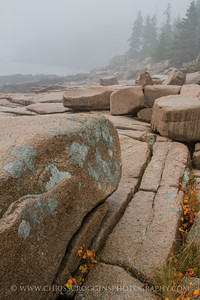 Acadia Granite and Fog