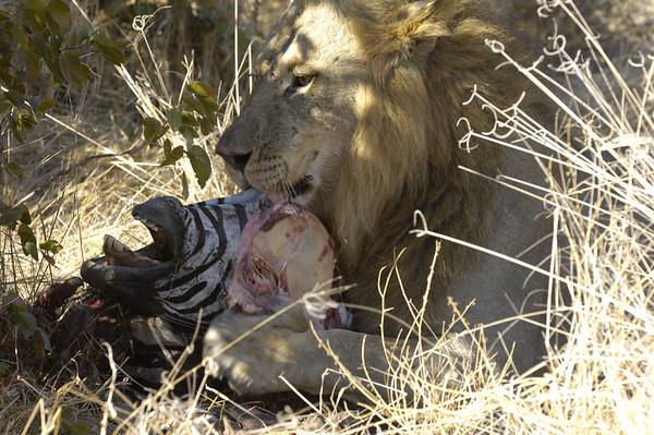 Zebra for lunch