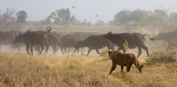 Corralling the herd