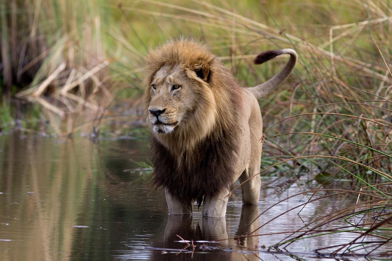 King of Duba