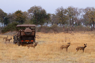 Safariers in the middle of the hunt