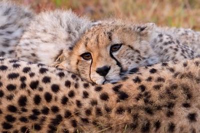 Nabor's cub snuggling close against the cool dawn air