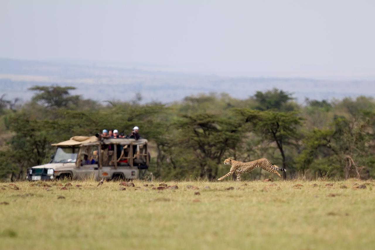 Nabor stalks impala for the paparazzi