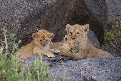 Namiri cub hugs her sister