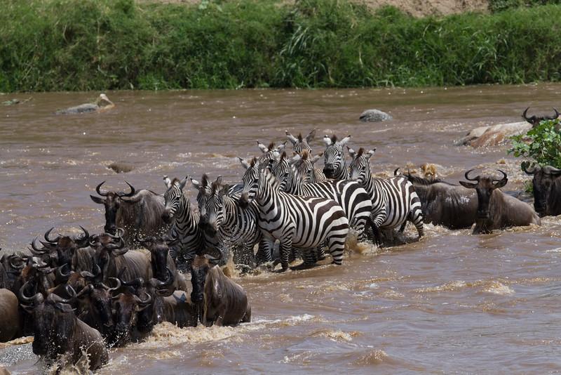 Crossing the Mara River