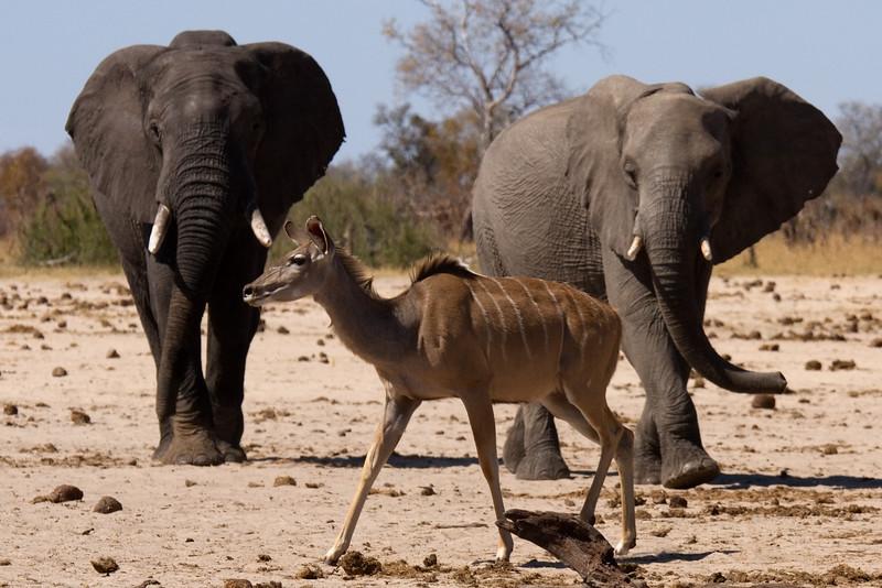 Interloper - Kudu