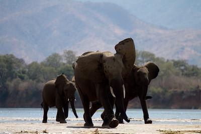 Excited elephants