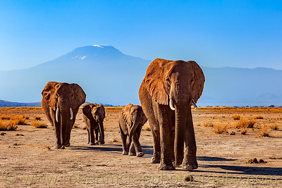 Elephants and Mt Kilimanjaro.