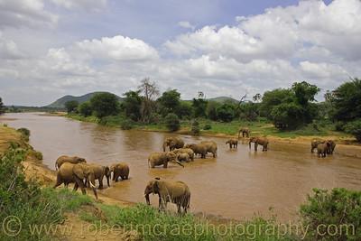 """""""Elephants in the River"""" - Award Winner"""