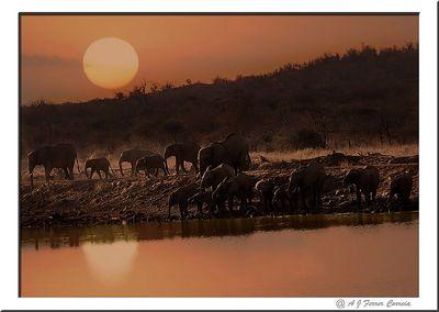 Elefantes - Uma bebida ao por-do-sol Elephant - Sundowners