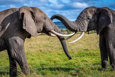 Playtime - Masai Mara, Kenya