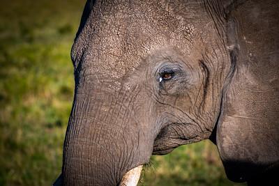 Close-Up  Masai Mara, Kenya
