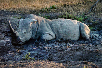 Nothing like a good mud bath - Kruger National Park, South Africa