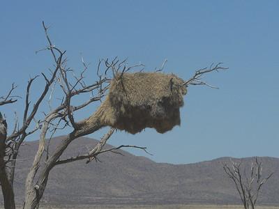 Social Weaver Nest