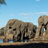 View of elephants from a bunker