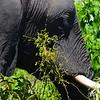 Elephant Angle 2