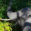 Elephant Angle 9