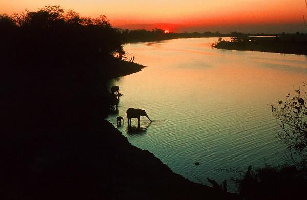 Chobe, Botswana Nature Images