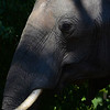 Elephant Angle 8