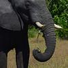 Elephant Angle 7