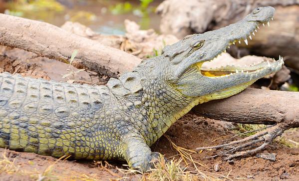 Best of Crocs