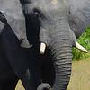 Elephant Angle 6