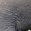 Elephant Angle 4