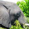 Elephant Angle 5