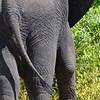 Elephant Angle 1