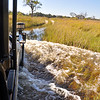 Wet Okavango Game Drive 2