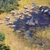 Okavango Elephant Herd From Air 3