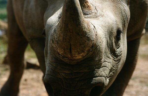 Best of Rhino