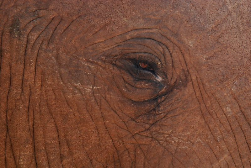 Elephant Eye: Set within a wrinkled roadmap of age and experience, this elephant's eye suggests that it has seen it all. Location - Addo Elephant National Park, South Africa.
