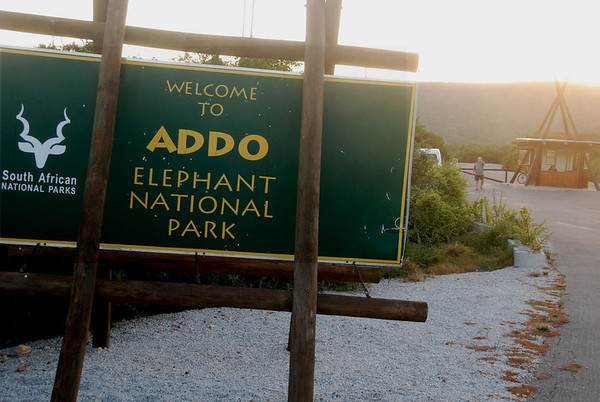 Addo Elephant Park, South Africa Nature Images