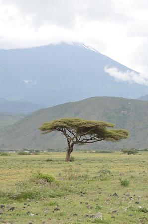 Arusha and Monduli, Tanzania Nature Images