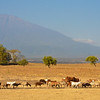 Livestock near Mount Meru