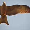 Flight of the Kite