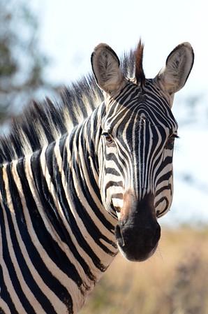 Tarangire, Tanzania Nature Images