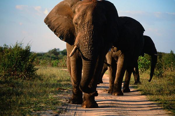 Best of Elephants