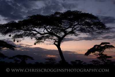 Africa Acacia Tree Sunset