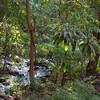 Lake Manyara Park Stream