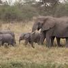 Baby Elephants with Aunt