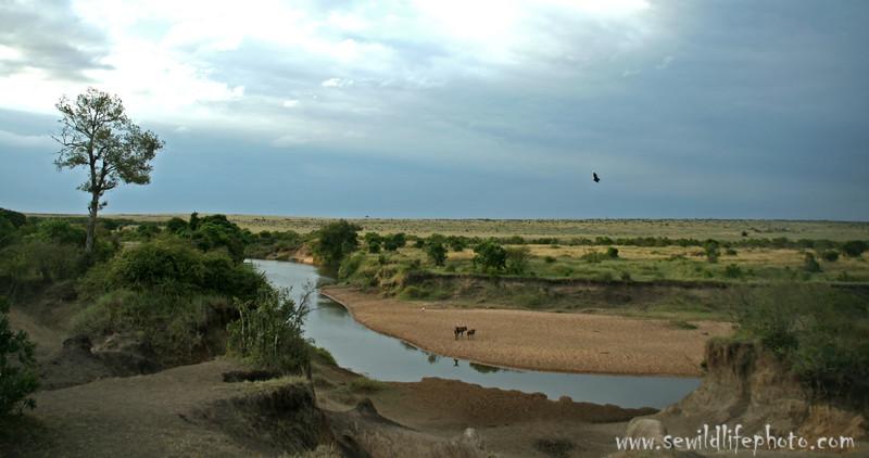 Riverine with wildebeest and bird of prey, Masai Mara Game Reserve, Kenya