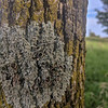 Awesome lichens.