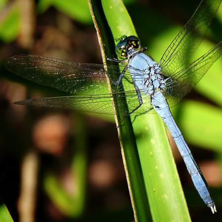 Alafia Scrub Nature Preserve, Florida