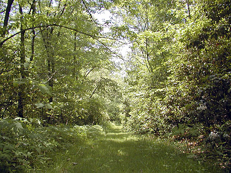 Section of trail 86e where it is very shady and grassy.<br /> Alarka, NC 6/5/07