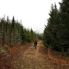 on the way back to the jeep walking through the red spruce bog.