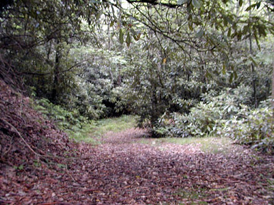 Trail at Alarka NC<br /> through rhododendron tunnel<br /> 6/5/07