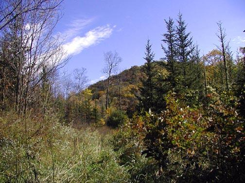 Alarka Laurel Red Spruce Bog in October<br /> 10/17/04<br /> NC