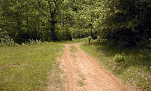 Red Dirt Road<br /> Alarka NC <br /> 6/5/07